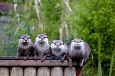 Family of Otters by Kate Ibbotson on 500px