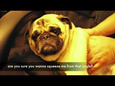 I'm questioning my boyfriend's manhood after he told me that he wants a pug. After watching this video it confirms that we will not be getting one and I'm still questioning his manhood.