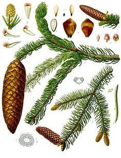 Interaktywny quiz online, rozpoznawanie gatunków drzew liściastych i iglastych, przyroda, biologia, dzieci i uczniowie