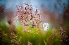 """Всё цветёт. И даже трава. Тот, кого мы называем просто """"трава"""", тоже цветёт. И это - моя Родина!   .   #южныйурал #chelyabinsk #russia #челябинск #chel #Че #суровыйЧелябинск #ural #фото #photo #россия #урал #экология #лето #трава #зеленый #цветы"""