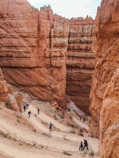 Well-Caffeinated TravellerWandering the world in search of adventure & the next great cup of Must-do Hikes in Bryce Canyon National Park Zion Camping, Grand Canyon Camping, Camping Gear, Backpacking, Bryce Canyon Hikes, Utah Hikes, Canyon Utah, Bryce National Park, National Parks