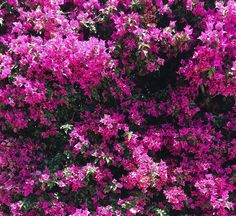 Some see pink, some see purple, so we call it magenta.