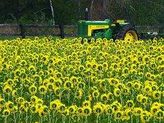 field, color, countri life, farm life, daisi, john deer, country life, tractor, flower
