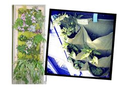 (45) Urban Garden by Grow Vertical from Alicia Silverstone on OpenSky