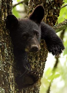Cade's Cove- memorable moment when a bear cub ran in front of our car.  So cute.  2012