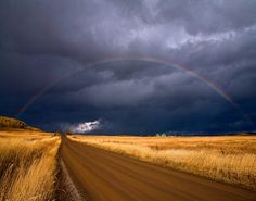 Beautiful! Kansas wheatfield. ♫ ♪ Somewhere over the rainbow..♫ ♪