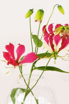 Plant guide: Tropical flowers gallery 8 of 8 - Homelife