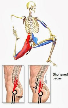 Psoas muscle attaches to your lower spine and to your thigh bone. If it's tight (sitting too much?) it pulls your lower back. It's one of the common causes of lower BACK PAIN! If you can stretch this regularly then your lower back may feel a lot better! Fitness Workouts, Fitness Del Yoga, Health Fitness, Fitness Diet, Tight Hip Flexors, Psoas Muscle, Muscle Pain, Muscle Body, Tight Hips