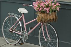 Ride your pink basket to go pick some pink roses in Sconset where they grow in the wild by the sea.