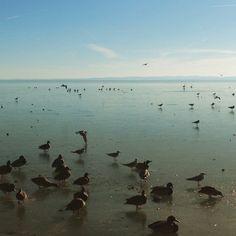Ducks on the lake