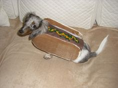 hot dog doxie this look never gets old. http://media-cache6.pinterest.com/upload/259168153526439634_PCrUH84S_f.jpg thelittlethings doxie