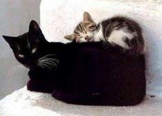 #Repost @welovecatsandkittens  The purr-fect place to have a nap... _____________________________  We LOVE cats and kittens...a lot!  We have a website that is updated multiple times a day with the very best cat stuff on the internet. For the cat obsessed we have Cat Videos Cat Pictures Cat Stories & Cat News. Click on the link below to visit the site and get a cat overdose!  http://ift.tt/21Q9Jrl  Why not click on the link in the bio to see our Cat Tee-Shirt of the Day   #catstagram…