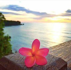 Wallpaper Celular Bloqueo Paisajes Ideas For 2019 Summer Wallpaper, Beach Wallpaper, Flower Wallpaper, Strand Wallpaper, Plumeria Flowers, Blue Flowers, Photo D Art, Pretty Wallpapers, Wallpaper Wallpapers