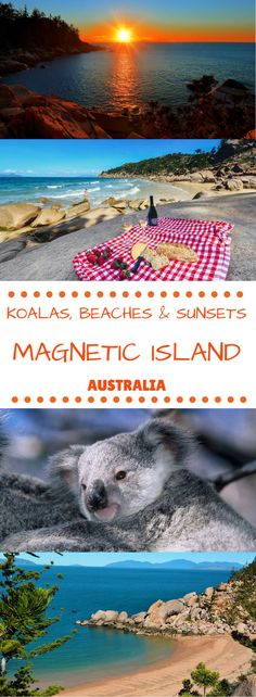 Koalas, Beaches, Sunsets and so much more on Magnetic Island, Australia! Visit Australia, Queensland Australia, Australia Travel, Western Australia, Sydney, Brisbane, Tropic Of Capricorn, Romantic Destinations, Travel Destinations