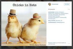 Piristystä päivään: Hattupäiset tiput ihastuttavat - katso söpöt kuvat