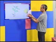 SuperAulas ENEM - Biologia - Fisiologia Vegetal / O Crescimento das Plantas