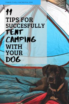 11 Tips for Successfully Tent Camping with Your Dog - Pawsitively Intrepid Tent Camping Checklist, Camping Glamping, Camping Essentials, Camping And Hiking, Camping Survival, Camping With Kids, Camping Life, Family Camping, Outdoor Camping