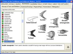 illustrated glossary - Google Search