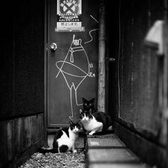 cat-black-and-white-photography-141