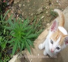 straincomplex:  Cats and dogs on marijuana