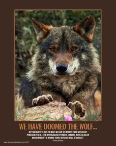 We Have Doomed The Wolf - Farley Mowat