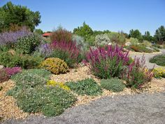 "Sept. 8, via http://prairiebreak.blogspot.com/2015/03/kendrick-lake.html ""Agastache 'Ava'"" (also russian sage, maybe that pink silent, ephedra, ornamental grass, poss. sun dancer daisy?)"