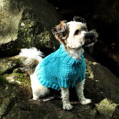 Ollie models Biscuits & Bones Dog Coat by Patons knit using Cascade Yarns 220 on 5.5mm needles.