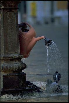 Impromptu Bird Bath in the Park, Venice  (by Phillip Greenspun)