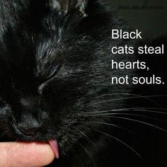 black cats steal hearts not souls.  I had a black cat, he was one cool kitty!