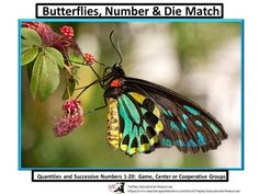 In  Butterflies, Number & Die Match Quantities 1-20, learners match colorful, high quality butterfly drawings to numbers and dice. These beautiful task cards challenge students and can be used at a center or as a class game.This lesson includes 18 printable pages, notes to teacher, center and game options.