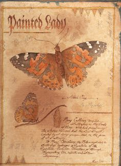 Painted Lady butterfly on the inside of an antiqued book cover. Ken Scott American Frontier Artist. www.americanfrontierart.blogspot.com