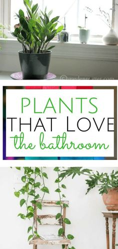 Who knew that these plants could thrive in a bathroom? Bathroom, Bathroom Decor, Indoor Gardening, Gardening