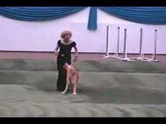 Carolyn Scott & Rookie the dancing golden