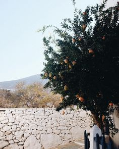 Pomegranates ✨ #fole