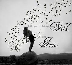 Wild and Free!