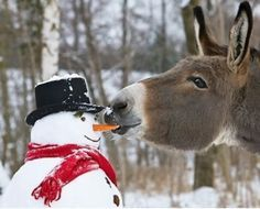 The snowman has a tasty nose