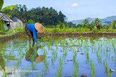farmhand by abdul-aziz