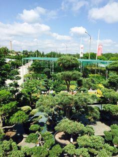 Bonsai Park, Garden Center, ogród, tree, japanese, shop, store, Japanese Shop, Park, Store, Plants, Lawn And Garden, Larger, Parks, Plant, Shop