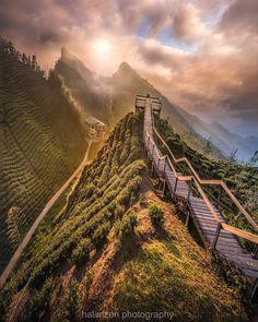 Nantou, Taiwan Travel Destinations, Holiday Destinations, Taiwan Travel, Nikon D810, Walking In Nature, Taipei, Vacation Places, Travel Bugs, Camera Nikon