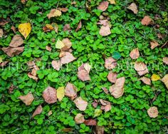 Early Fall--Fine Art Nature photo. $25.00, via Etsy.