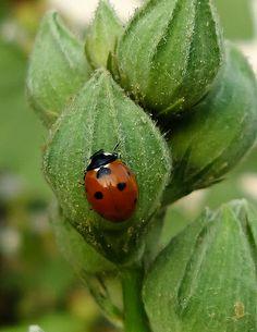 .A garden's friend.
