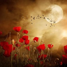 Nature Landscape wallpaper by Venus_ - - Free on ZEDGE™ Art Floral, Beautiful Moon, Beautiful Flowers, Beautiful Person, Photo Ciel, Foto Fantasy, Landscape Wallpaper, Red Poppies, Stars And Moon