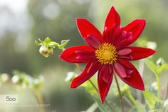 Lady in Red by H_D. Please Like http://fb.me/go4photos and Follow @go4fotos Thank You. :-)