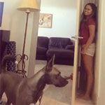 Dog Sucks At Hide And Seek