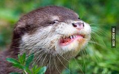 An otter eating a meatball
