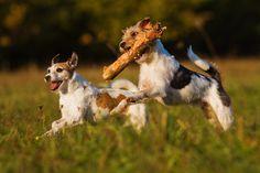 Barkworthies Proper Pet Care Series #2: Exercise #petcare #dogs #dogblog #exercise // Barkworthies.com