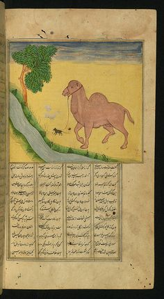 The Camel and The Mouse - Mouse trys to lead a camel, Illuminated Manuscript, Collection of poems (masnavi), Walters Art Museum  via Flickr