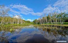 Tranquil Xilin Gol grassland in summer   #travel #china #WindhorseTour