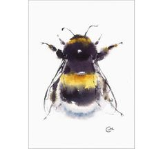 Bumblebee  Original Watercolor Insect Painting 5 by CMwatercolors