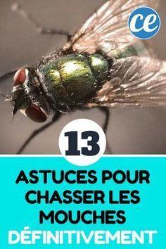 13 Astuces Naturelles Pour Chasser Les Mouches Définitivement.